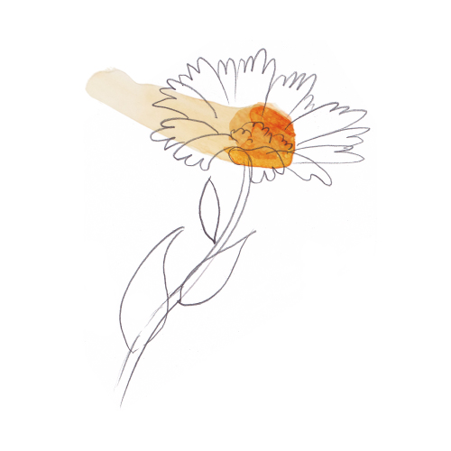 Colección Aceites Florales